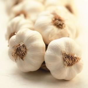 garlic_310_0