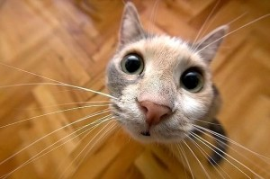 gatinho-a-olhar