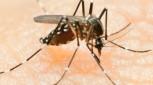 iStock_000014646405Small_dengue_flubydust-e1358874031974-153x85
