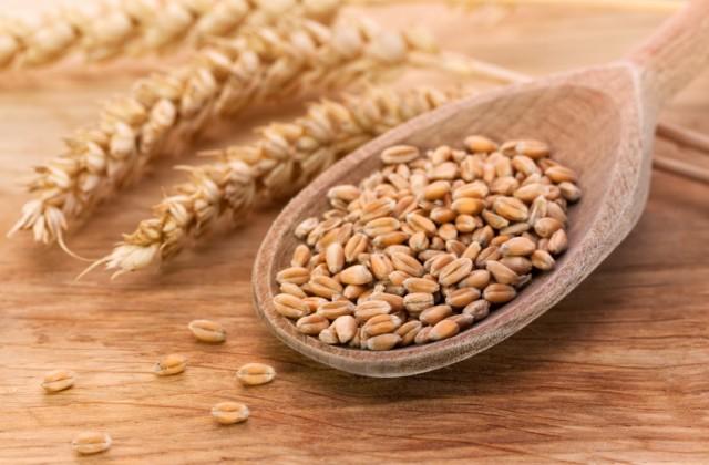 grãos - trigo - doutissima - iStock
