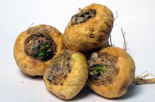 maca-peruana