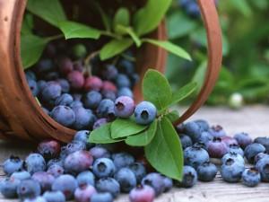 1 Blueberry