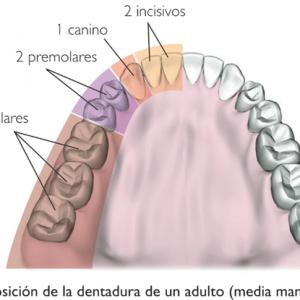 incisivos-5