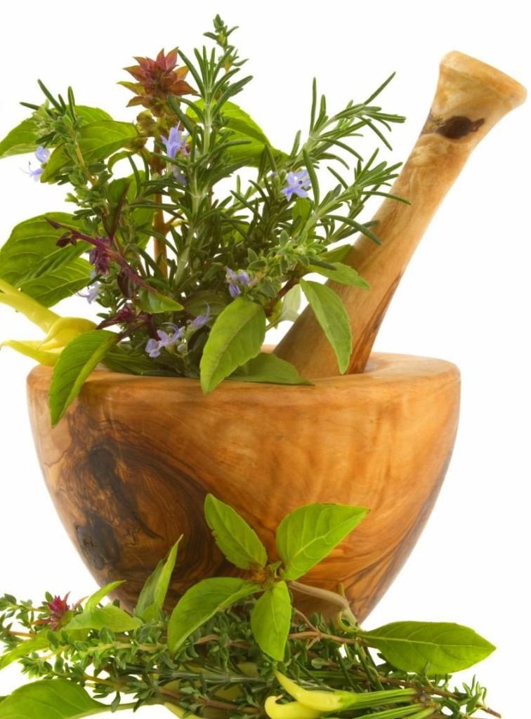 Plantas-medicinais-756x1024
