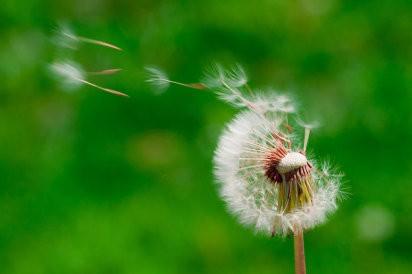 alergia ao pólen