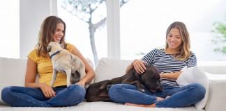 Animais de estimação em casa - doutissima - iStock getty images