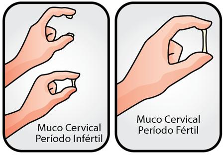 sinais do período fértil