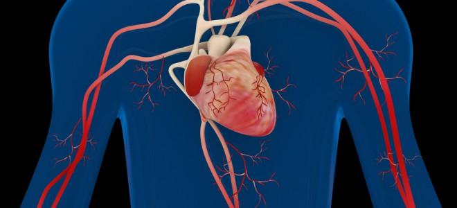 Sistema circulatório não se restringe ao coração e está presente em todo corpo. Foto: Shutterstock
