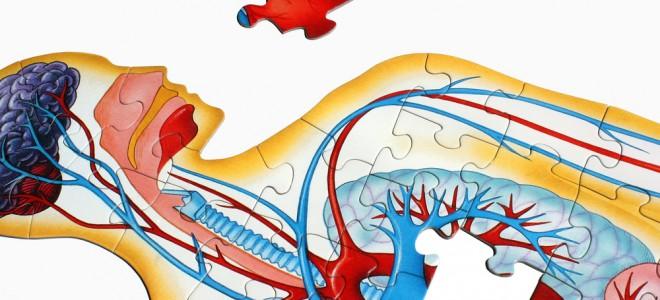 Má circulação é causada pelo acúmulo de gordura em paredes de artérias. Foto: Shutterstock