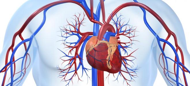 É possível diagnosticar a endocardite bacteriana com a ecografia transesofágica. Foto: Shutterstock