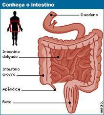câncer no intestino