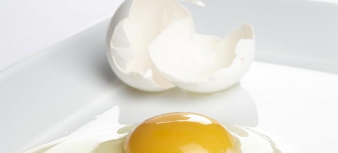 clara de ovo pasteurizada