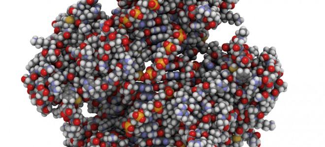 Alvo de estudos, proteína p53 é considerada importante na prevenção de tumores. Foto: Shutterstock