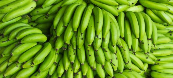 Banana verde, especialmente quando cozida, auxilia bastante na saúde intestinal. Foto: Shutterstock
