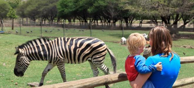 visita-ao-zoológico