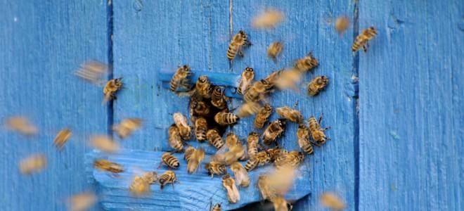 ataque-de-abelhas