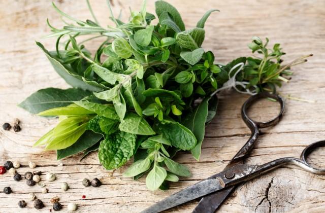 Muitas plantas podem ser ótimas aliadas na luta contra a balança. Foto: iStock, Getty Images