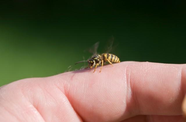 picada-de-abelha