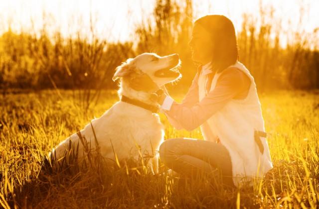 saúde dos cães