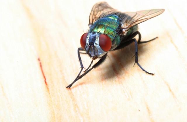 como acabar com as moscas