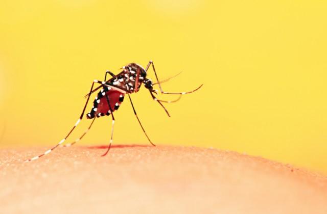 tratamento da febre amarela