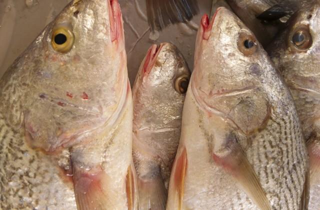 alimentos ricos em proteínas pescada