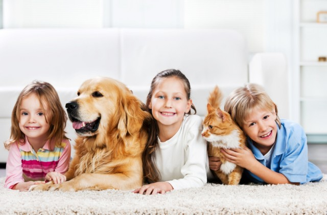 animais doutíssima istock getty images