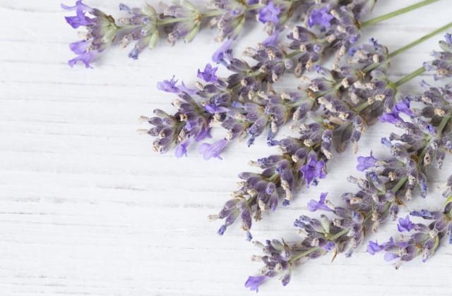 flor comestivel doutissima shutterstock 06