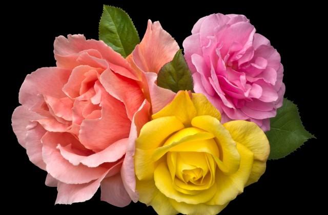 flor comestivel doutissima shutterstock 07