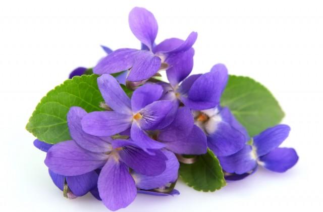 flor comestivel doutissima shutterstock 08