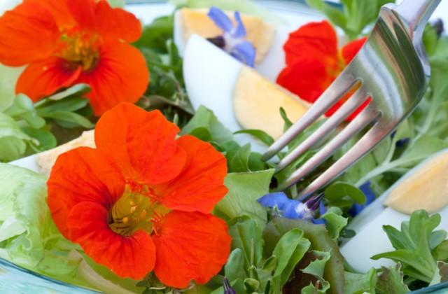 flor comestível - doutissima - iStock