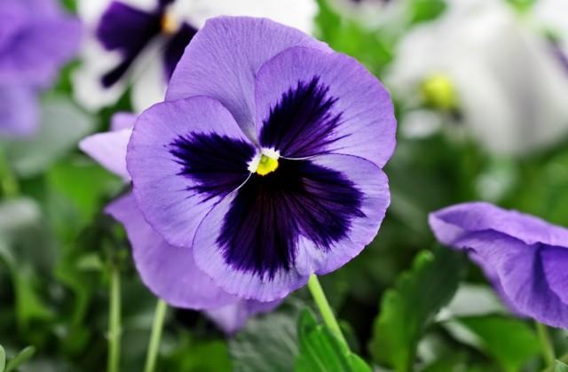 flor comestível doutissima shutterstock 01