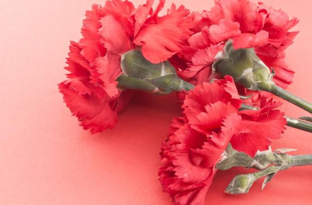 flor comestível doutissima shutterstock 05
