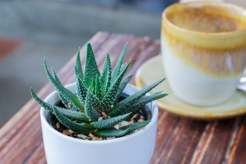 plantas para ambientes fechados