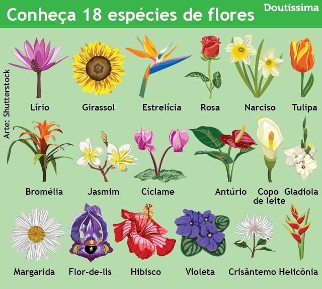 arranjos de flores infográfico doutíssima
