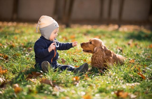 bebês e animais de estimação istock getty images doutíssima