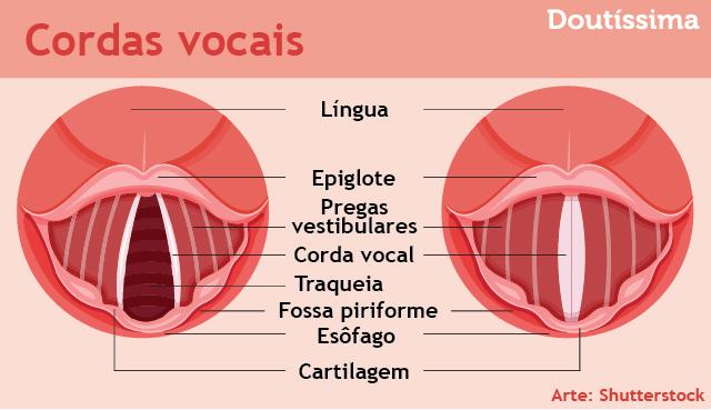 exercícios vocais infográfico doutíssima