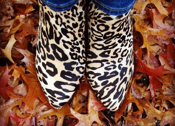leopardo-instagram-reproducao-doutissima