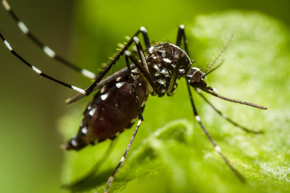 Tratamento da dengue