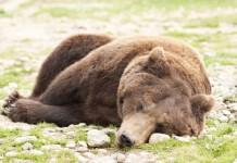 hibernar