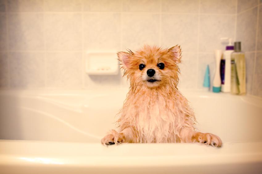 como dar banho em cachorro