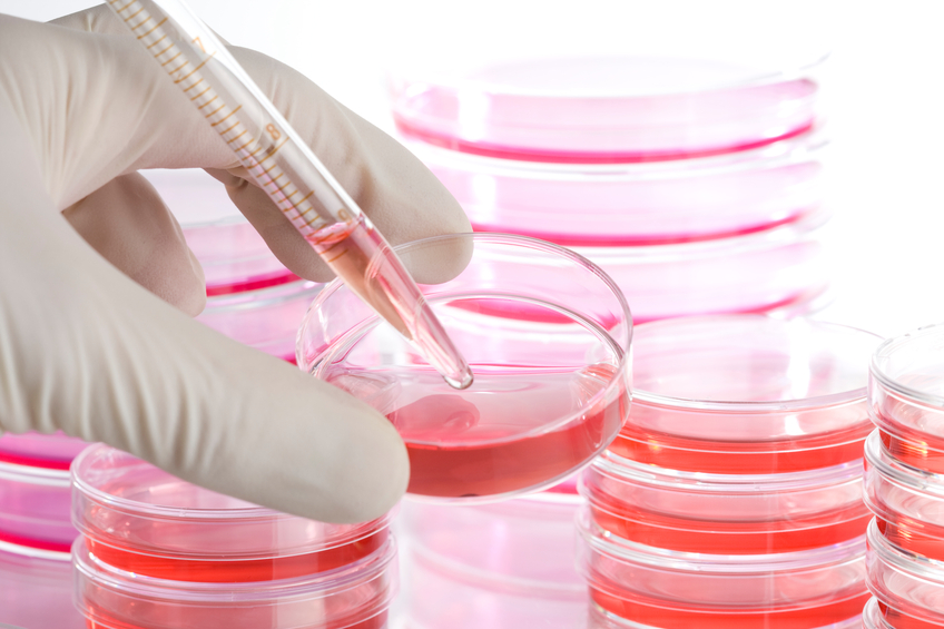 Saiba tudo sobre a importância das células-tronco. (Foto: Istock)